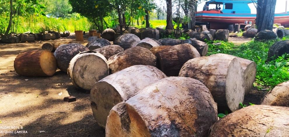 Tampak Ratusan bongkol pohon kelapa yang digunakan untuk bahan pembuatan doll, terbuang mubazir